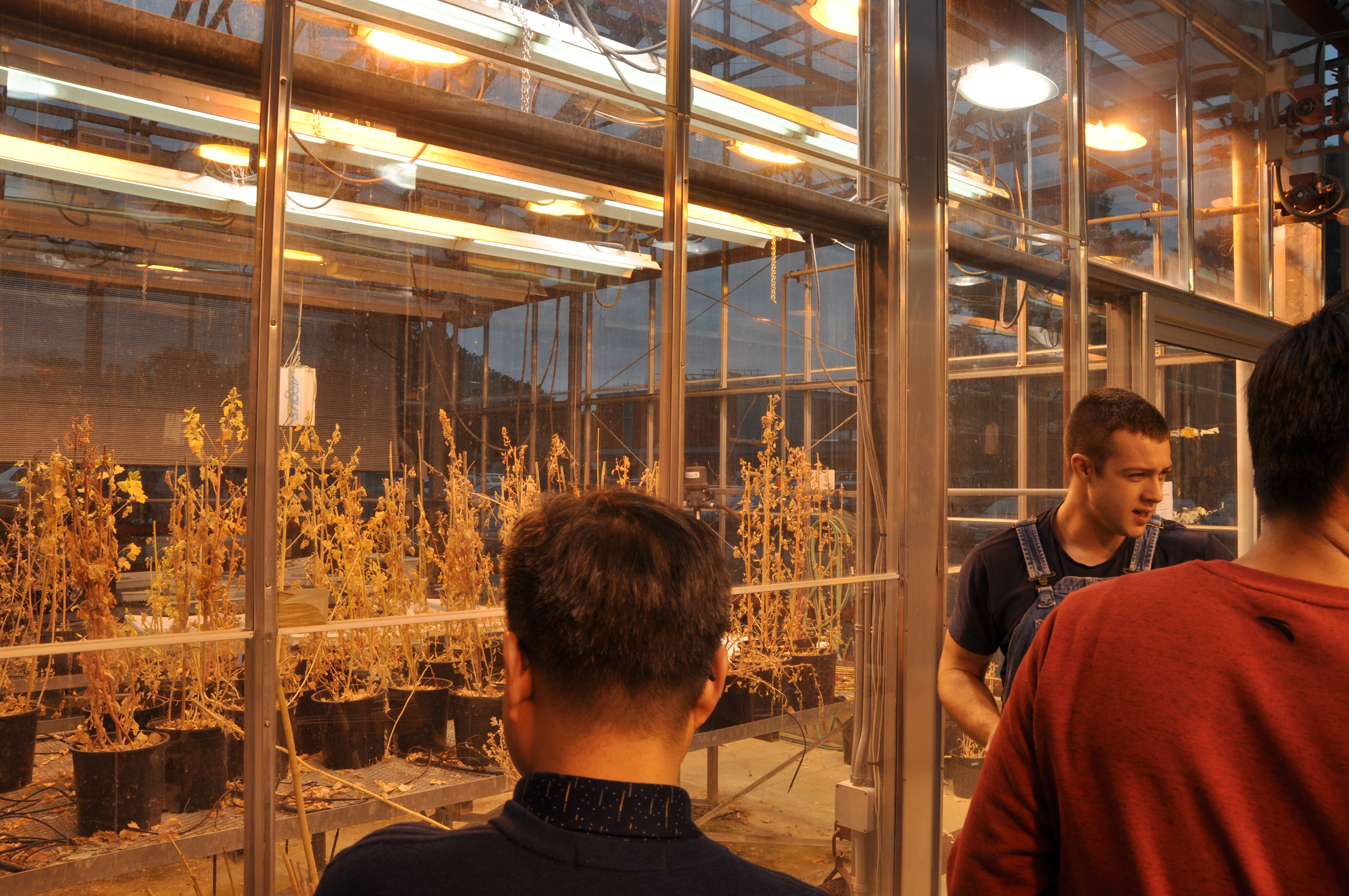 Austin Bruch gives tough of plant agriculture building to Chinese Delegates